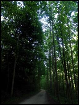 Ohiopyle State Park 063