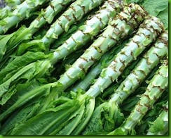 Asparagus lettuce