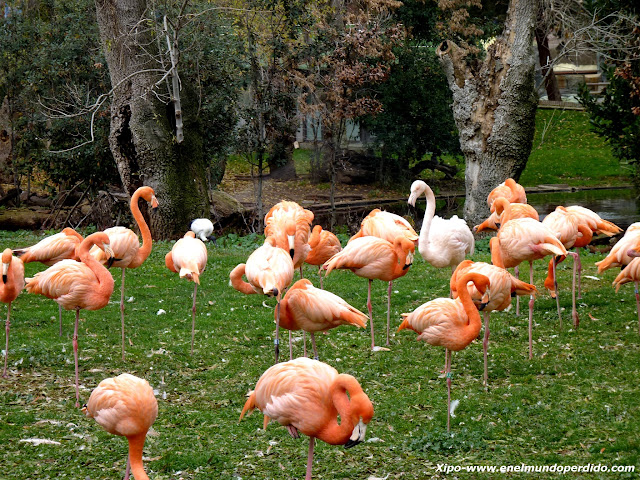 flamencos-en-el-zoo-de-madrid.JPG