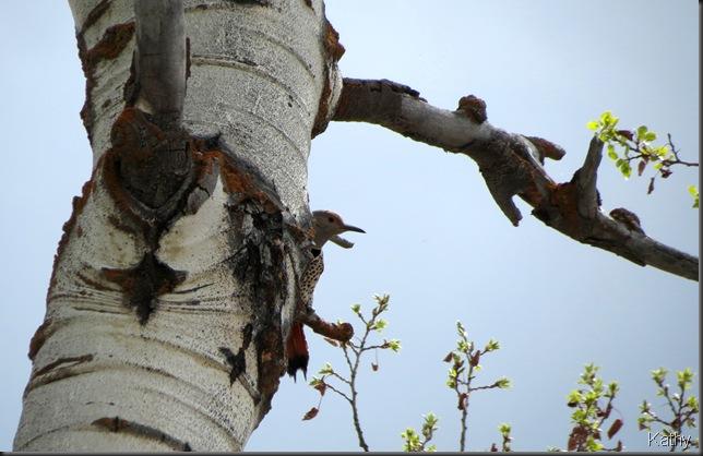 near the nest