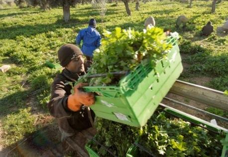 Επιχειρησιακό Σχέδιο Ολοκληρωμένης Ανάπτυξης Αγροτικού Χώρου εκπονεί ο Δήμος Κεφαλονιάς σε συνεργασία με τοπικούς φορείς