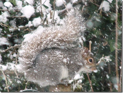 20130312 snow squirrel