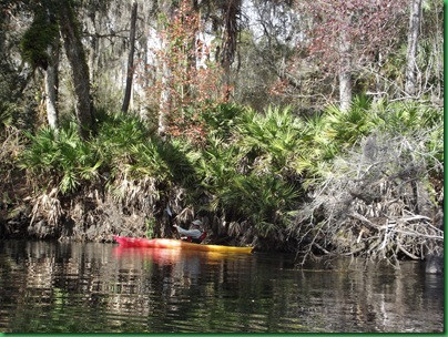 Hillsborough River Paddle (4)
