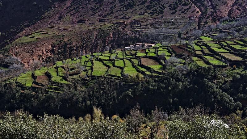 Ogoarele create cu truda ale marocanilor.