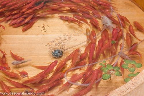 peixes pintados em 3d desbaratinando (11)