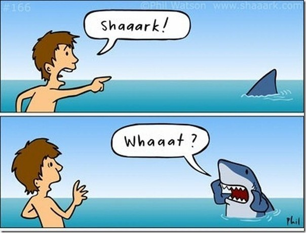 Socorro Tubarão