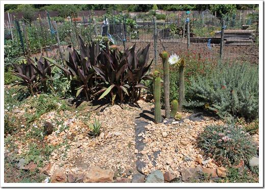 120603_Davis-Community-Garden_02