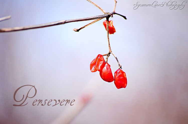 berries-w