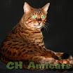 Indiana_Amicats1.jpg