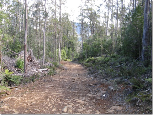 View downhill of the steep Jeffreys Track