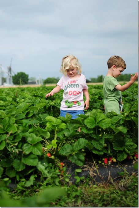 Strawberry Picking & Marcus band 004