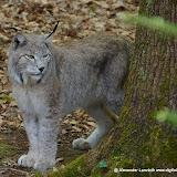 Wildpark-PF_2012-04-29_959-kopie.jpg