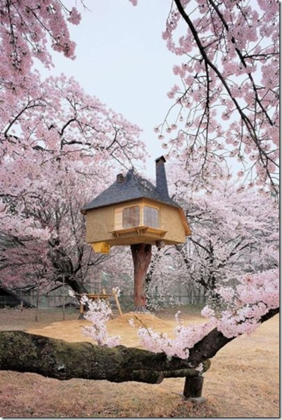 awesome-treehouses-15