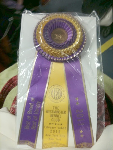 Take a gander at the ribbon!  Best of Breed!  I am determined to get one of those of my own someday!