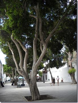 Lanzarote mare 865