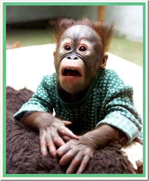 monkey sad