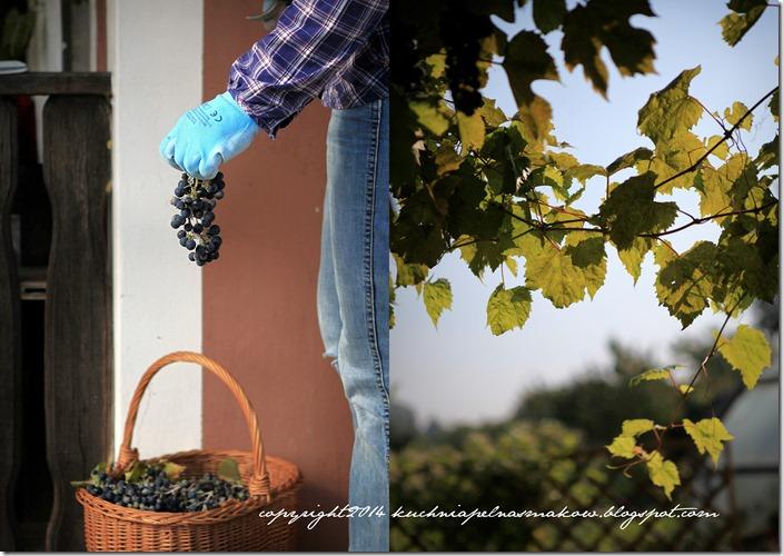 Lody winogronowe