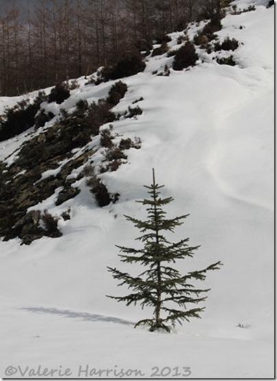22-tree