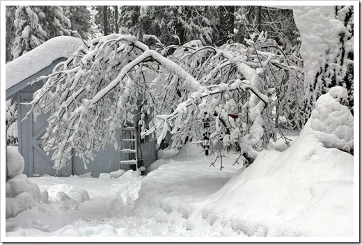 121223_snow_002