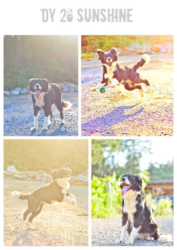 sunshine collage-