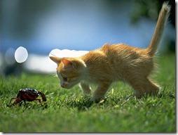 Fotos de gato buscoimagenes (37)