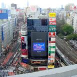 in Shibuya, Tokyo, Japan