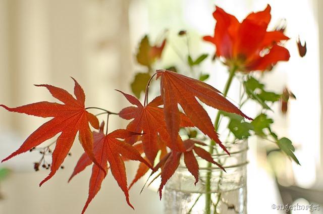 DSC_0118_red garden blooms