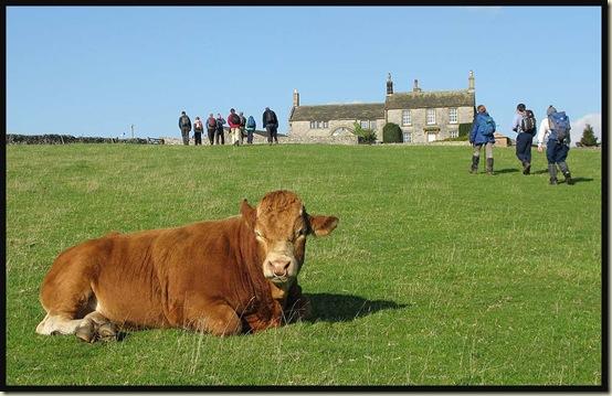 A bull near Silly Dale