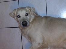 Yago (1)