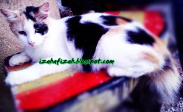 kucingcomel1
