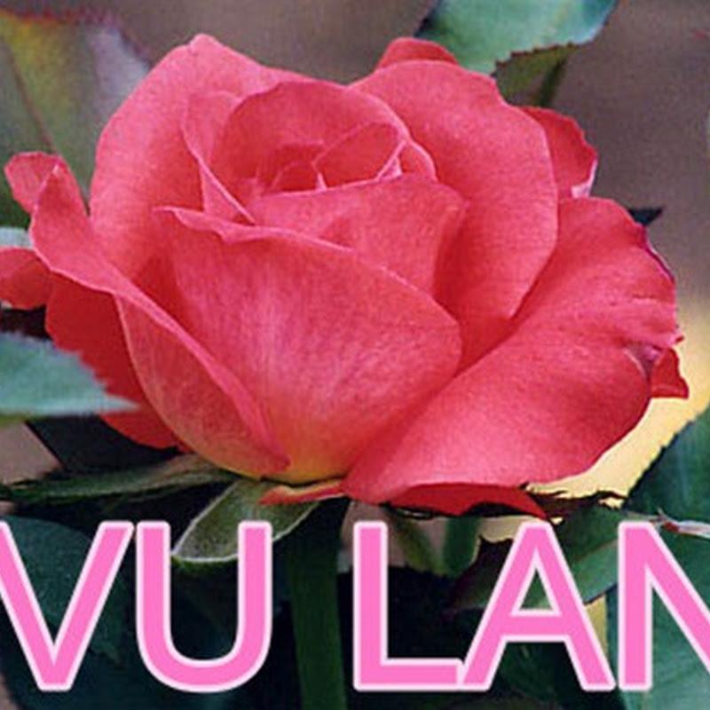 Album nhạc bài hát Vu Lan rất hay