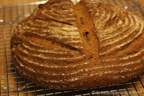 einkorn-bread-sponge31