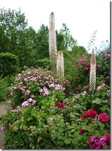 2 hyde park rose garden 1