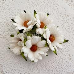 142806-daisywhite