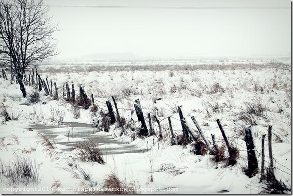 pola w zimowej szacie (2)
