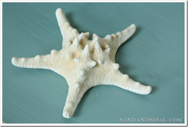 chalk Paint starfish