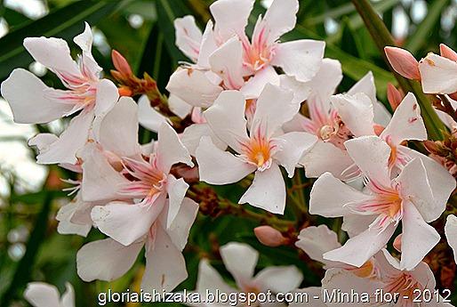 Glória Ishizaka - minhas flores - 2012 - 10