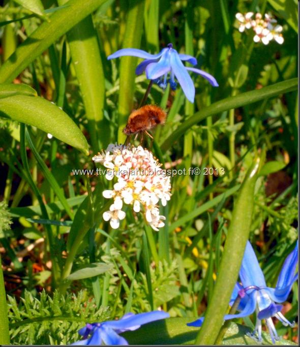 makro kukkia 098