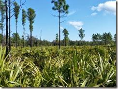 Palmetto Field