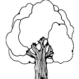 Fall-Big-Tree.jpg