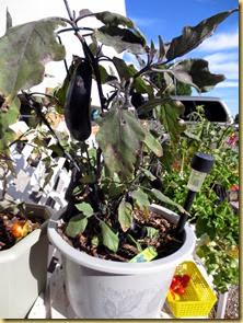 2014-01-12 - AZ, Yuma - Cactus Gardens - Our Garden -002 (1)