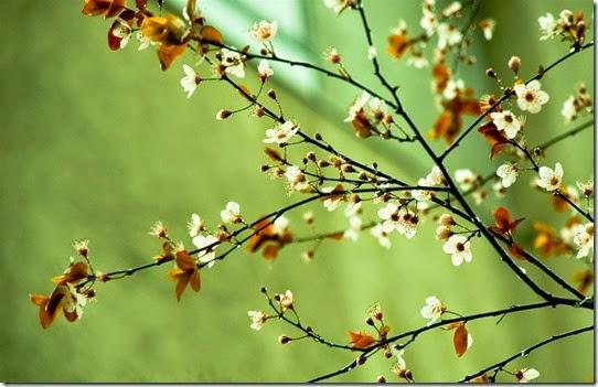 Spring-flowers-spring-22176435-1920-1200