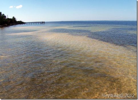 2012-01-24 Pine Island Florida 007