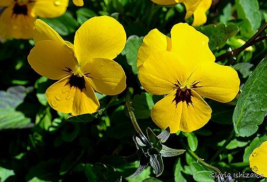 Glória Ishizaka - Flor amarela 34