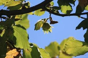 [36]_Trilho_Quercus_-_Avela