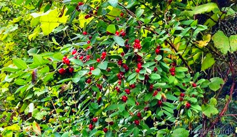 2. 7-28-14 dogberries