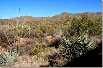 AZ Sanora Desert Museum 008