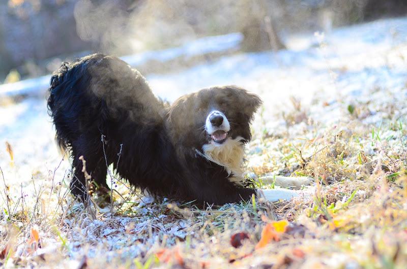 snow dog-3512