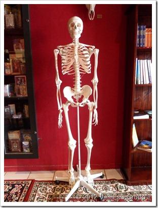 SkeletP1030568