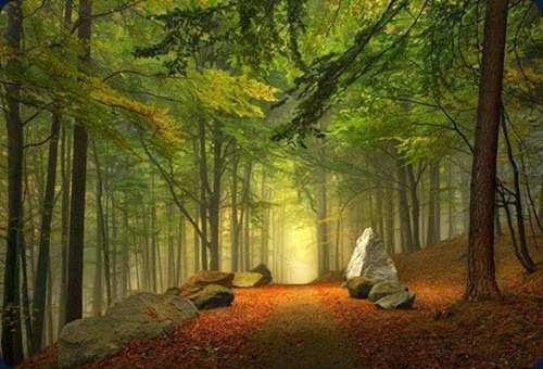 Enchanted-Forest-Bavaria-Germany-620x422
